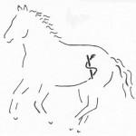 Imke Schlömer - Physiotherapie für Mensch und Pferd